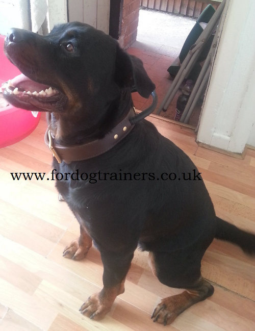 Rottweiler Collars UK