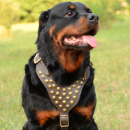 Rottweiler Harness UK Studded Leather for Dog Walking