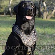 Royal Dog Harness for Labrador | Luxury Nappa Padded Dog Harness