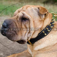 Royal Padded Dog Collar for Shar Pei with Spikes