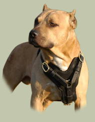 Exclusive Handcrafted Padded Leather Harness for Pitbull UK