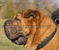 Shar Pei Dog Breed Perfect Dog Collar for Daily Dog Walking