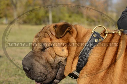 Shar Pei dogs pictures