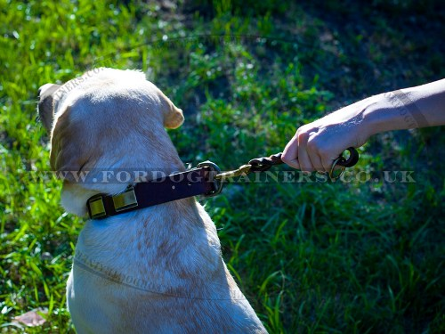 Short Leather Dog Lead