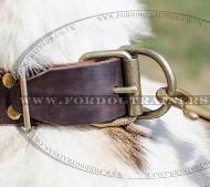 New Dog Collar for Siberian Husky | Designer Dog Collars UK