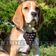 Small Dog Harness for Beagle with Studs | Leather Dog Harness