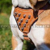 Small Dog Harness Spiked Design | Beagle Harness with Studs
