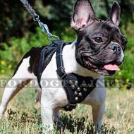 Small Dog Harness for French Bulldog with Pyramids