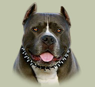 Leather 3 Rows Spiked Dog Collar UK for Pitbull