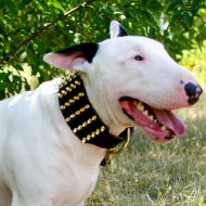 Spiked Dog Collar for Bull Terrier | Wide Dog Collar with Spikes