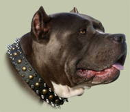 Staffordshire Bull Terrier Collars Spiked-Studded Design