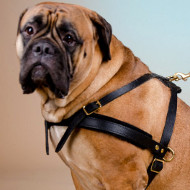 Bullmastiff Harness for Pulling and Tracking, Walking, Sport
