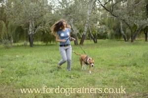 Staffordshire Bull Terrier Temperament