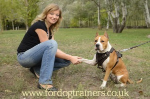 Staffordshire Bull Terrier Behavior