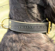 Large Dog Collars for Riesenschnauzer | Strong Dog Collar