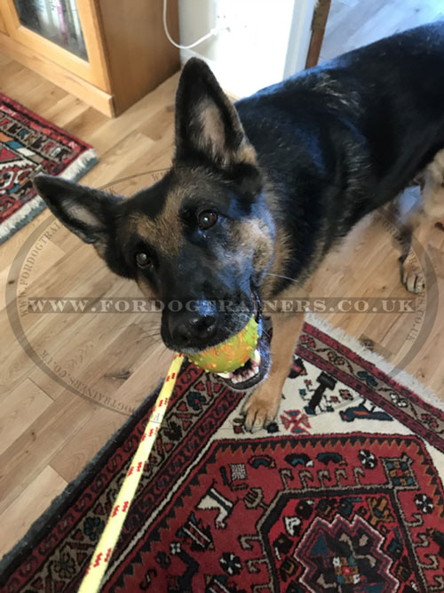 solid rubber dog ball on rope