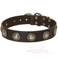 Studded Dog Collar | Vintage Dog Collar UK for Sale