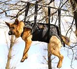 Tactical Insertion Harness for Service Dogs