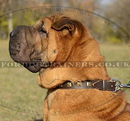 The Best Quality Leather Dog Collar with Brass Studs for Sharpei