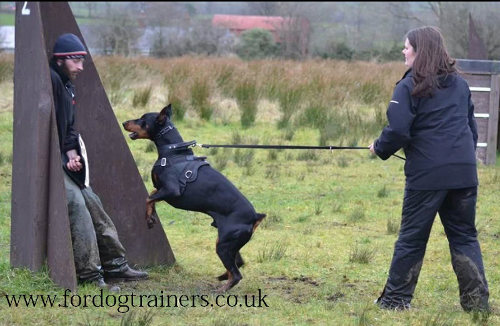 the best dog collar for agitation training