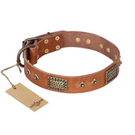 "Big Dog Collar with Plates and Studs ""Catchy Look"" FDT Artisan"