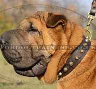 Wide Leather Collar with Brass Fitting for Shar Pei Dogs
