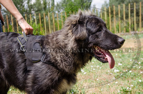 nylon dog harness with handle for Caucasian Shepherd