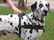 Dalmatian Tracking /Pulling/Walking Leather Dog Harness