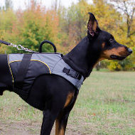 Warm Dog Coat for Walking in Cold and Support of Your Dog