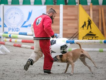 what is mondioring dog sport