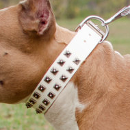 White Leather Dog Collar Exclusive Edition | New Dog Collars UK