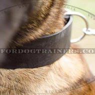 Wide Dog Collar for Belgian Shepherd | Wide Leather Dog Collar