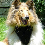 Xtra Dog Harness for Collie | Padded Dog Harness ➽